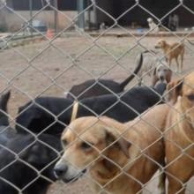 Abrigo para animais abandonados