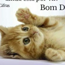 Amor a gato.