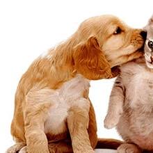 Arrecadação para Os cães é gatos