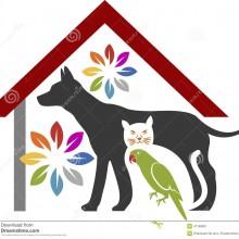 ajude animais abandonados